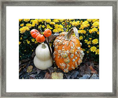 Pumpkin And Squash Framed Print