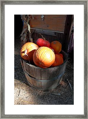 Pumpkin Barrel Framed Print