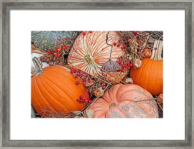 Pumpkin Beauty Framed Print by Becky Lodes