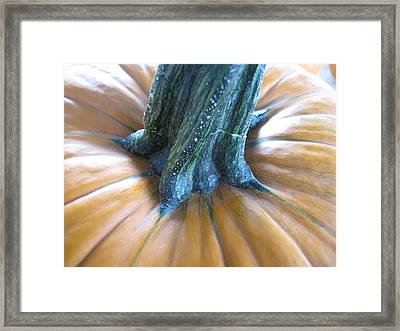 Framed Print featuring the photograph Pumpkin by Beth Vincent