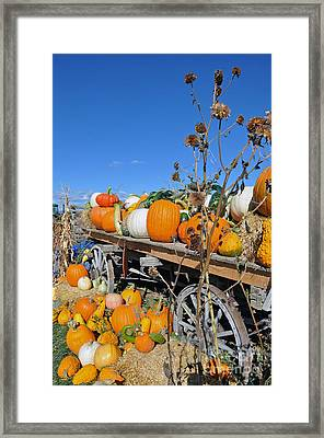 Framed Print featuring the photograph Pumpkin Farm by Minnie Lippiatt
