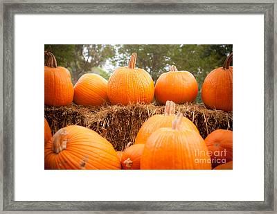 Pumpkin Fest Framed Print by Sonja Quintero