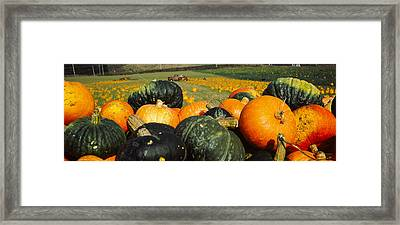 Pumpkin Field, Half Moon Bay Framed Print by Panoramic Images