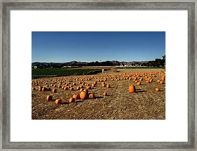 Framed Print featuring the photograph Pumpkin Field by Michael Gordon