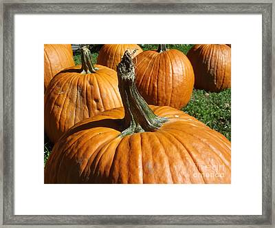 Pumpkin Gang Framed Print by Cheryl Hardt Art