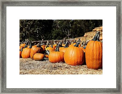 Pumpkin Goofing Off Framed Print