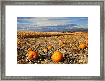 Pumpkin Harvest Framed Print by Mike  Dawson