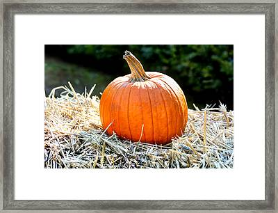 Pumpkin In The Hay Framed Print