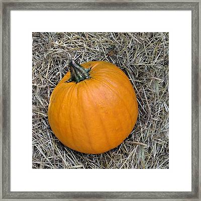 Pumpkin In The Hay Framed Print by Patricia E Sundik
