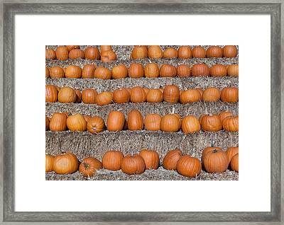 Framed Print featuring the photograph Pumpkin by Lora Lee Chapman