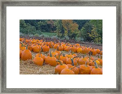 Pumpkin Parade Framed Print