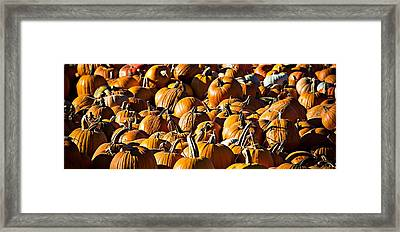 Framed Print featuring the photograph Pumpkin Patch  by Aaron Berg