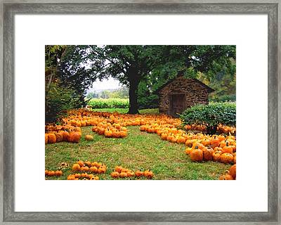 Pumpkin Patch Framed Print by Garland Johnson