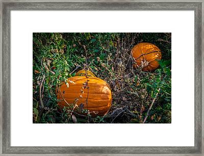 Pumpkin Patch Framed Print by Gene Sherrill