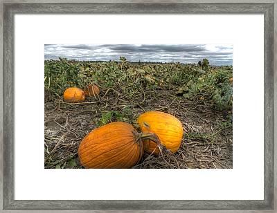 Pumpkin Patch Framed Print by Jane Linders