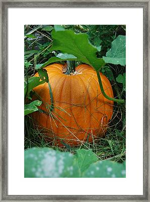 Framed Print featuring the photograph Pumpkin Patch by Ramona Whiteaker