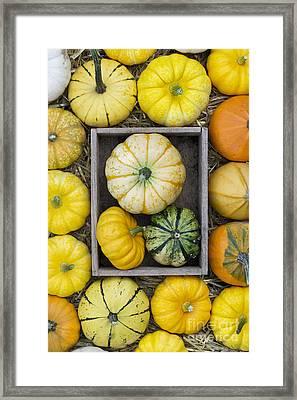 Pumpkin Pattern Framed Print by Tim Gainey