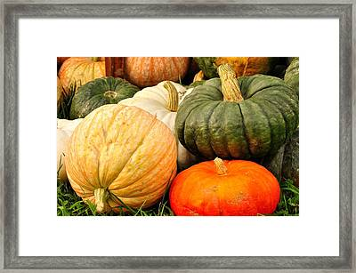 Pumpkin Pleasure Framed Print by Gene Sherrill