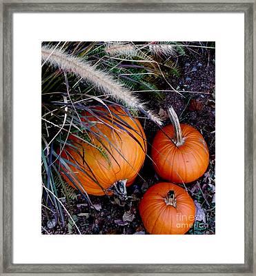 Pumpkin Portrait Framed Print
