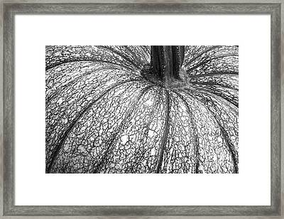 Pumpkin Pumpkin Black And White Framed Print