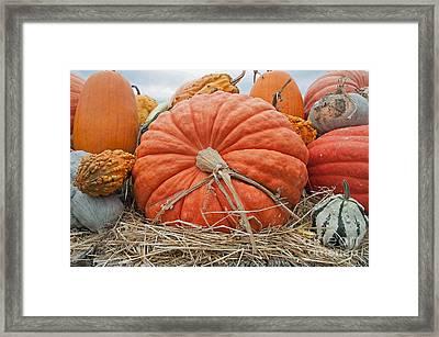 Pumpkin Times Framed Print