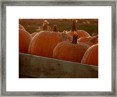 Pumpkin Webbed Light Framed Print
