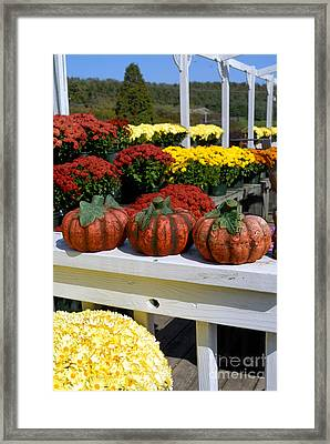 Pumpkins And Fall Flowers Framed Print by Amy Cicconi