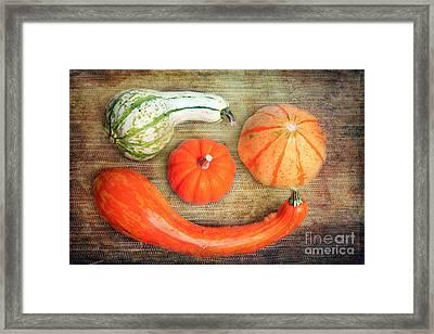 Pumpkins Framed Print by Angela Bruno