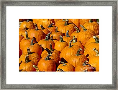 Pumpkins Framed Print by Anthony Sacco