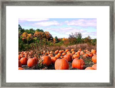 Pumpkins Galore Framed Print by Lisa Kilby