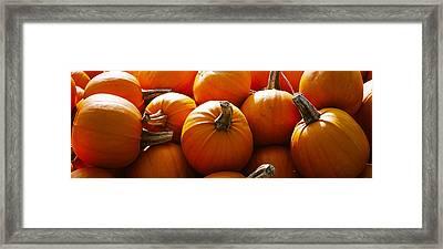 Pumpkins, Half Moon Bay, California, Usa Framed Print by Panoramic Images