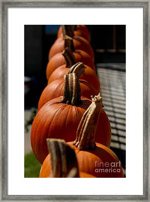 Pumpkins In A Row Framed Print by Amy Cicconi