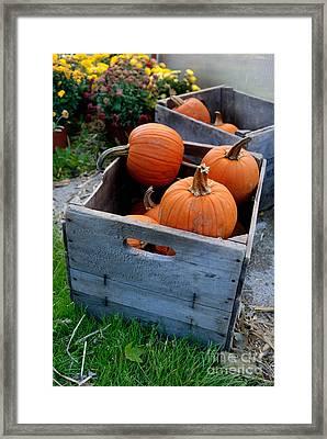 Pumpkins In Wooden Crates Framed Print