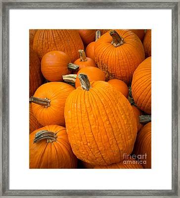 Pumpkins Framed Print by Inge Johnsson