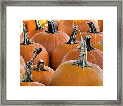 Pumpkins Framed Print by Janice Drew