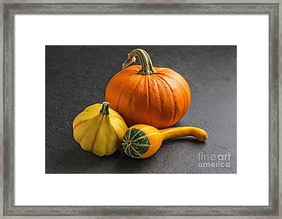Pumpkins On A Slate Plate Framed Print by Palatia Photo