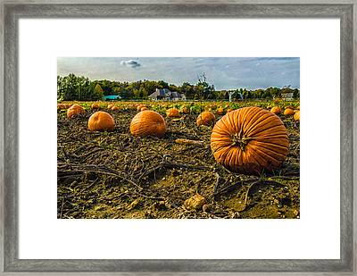 Pumpkins Picking Framed Print by Louis Dallara
