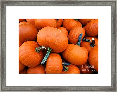 Framed Print featuring the photograph Pumpkins  by Sarah Mullin