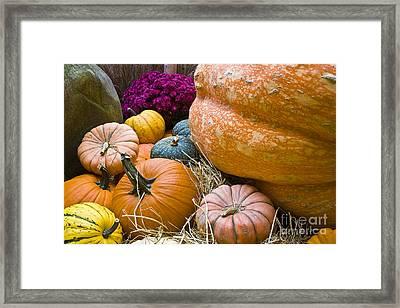 Pumpkins Framed Print by Tim Hightower
