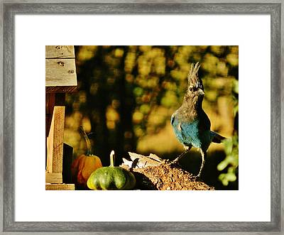 Punked-out Jay Framed Print by VLee Watson