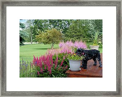 Framed Print featuring the photograph Pup And Flowers by Elaine Franklin