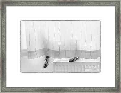 Pup Behind The Curtain Framed Print by Natalie Kinnear