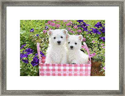 Puppies In A Pink Basket Framed Print