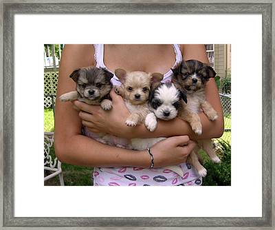 Puppies In Maria's Arms Framed Print by John Lautermilch