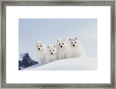 Puppies In Snow Framed Print by Mitsuyoshi  Tatematsu