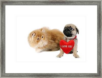Puppy And Kitten. Framed Print