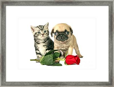 Puppy And Kitten For Present Framed Print