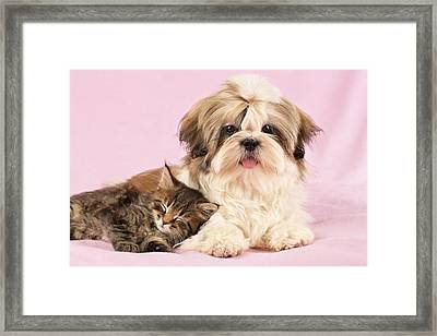 Puppy And Kitten Framed Print