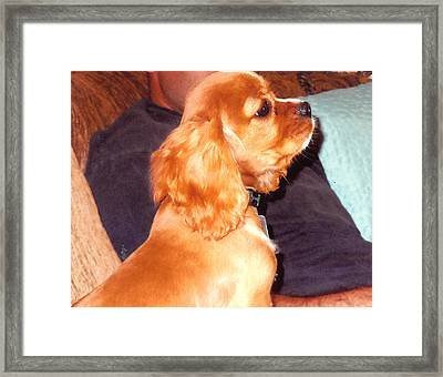 Puppy At Attention Framed Print by Barb Baker