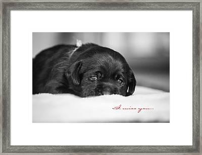 Puppy Black Lab  Framed Print by Toni Thomas